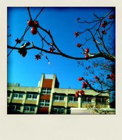 himejischool.jpg